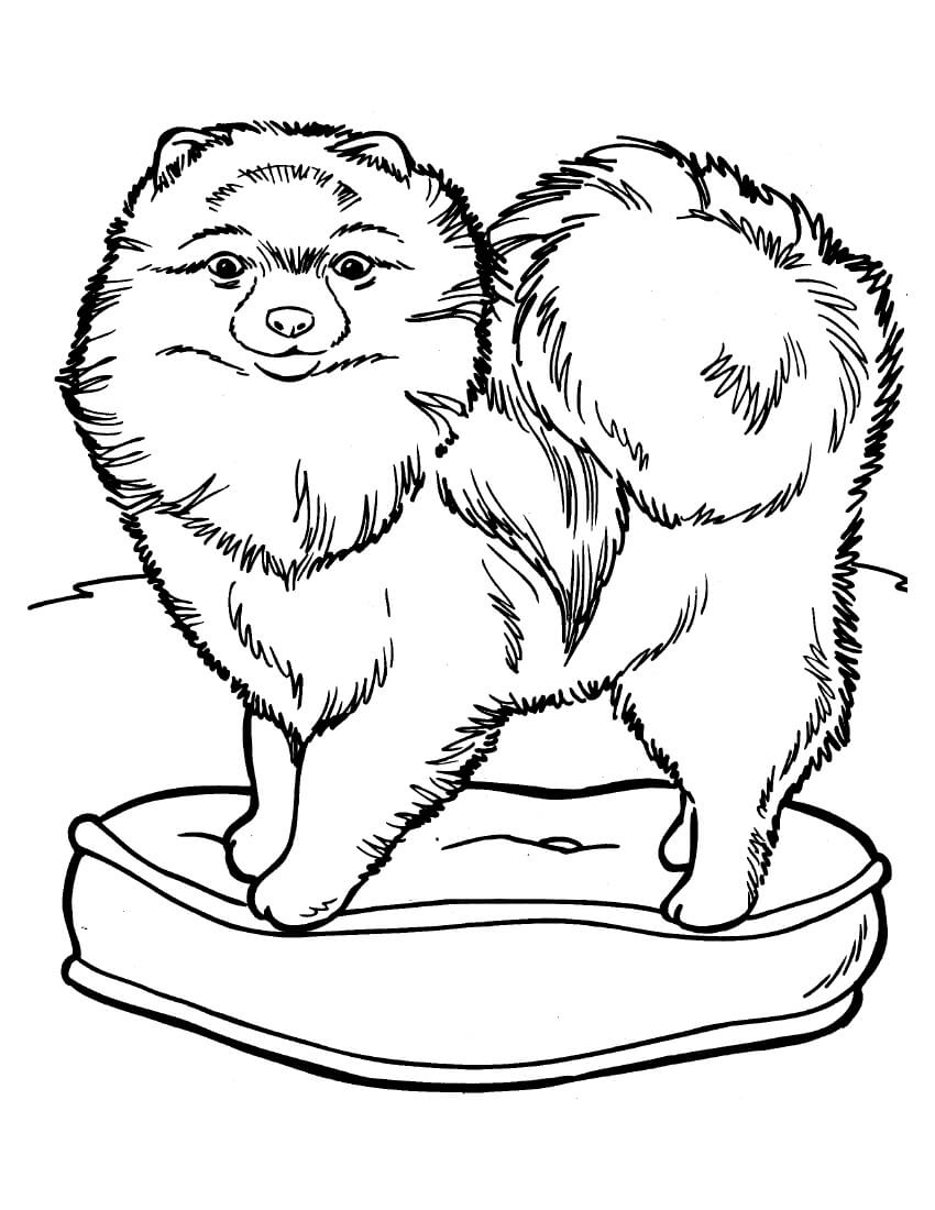 Chow chow is on the pillow Coloring Page