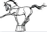 Circus Horses - image 2