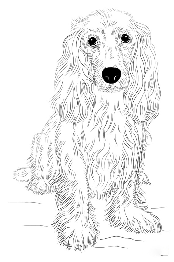 Cocker Spaniel Coloring Page