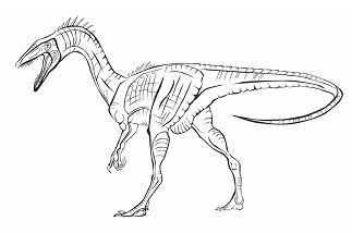 Coelophysis Bauri Dinosaur
