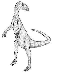 Coelophysis Dinosaur 3