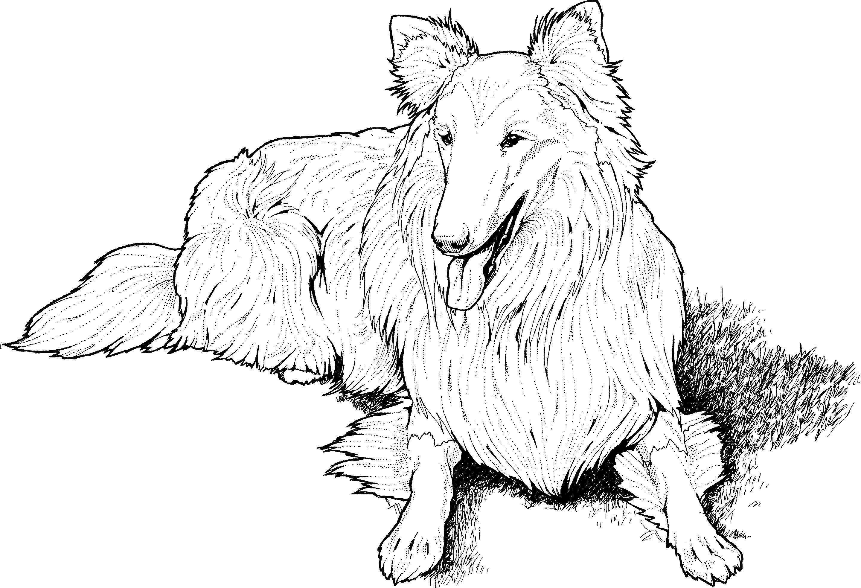 Collie Coloring Page