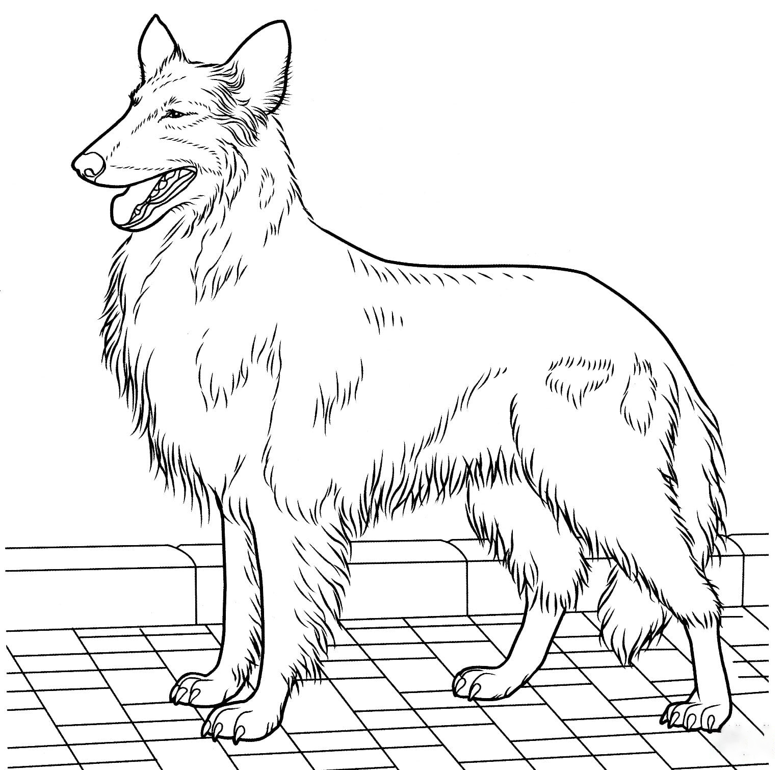Colly Coloring Page