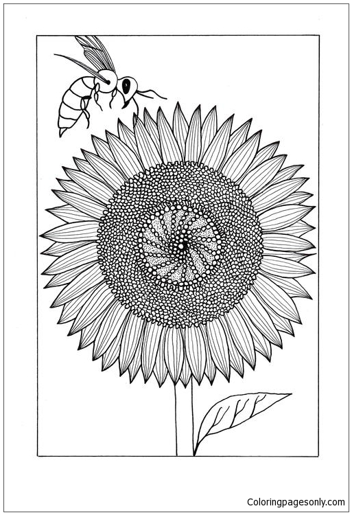 Colorful Sunflower Coloring Page