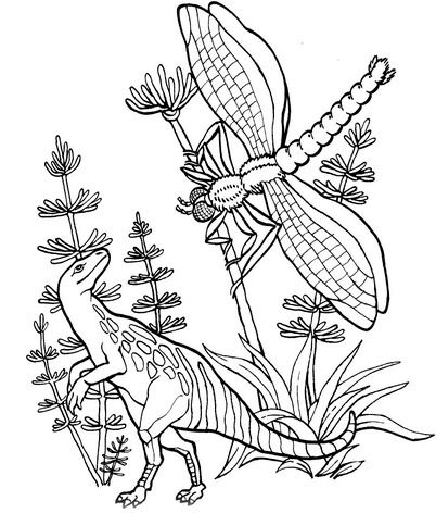 Compsognatus And Meganeura Coloring Page