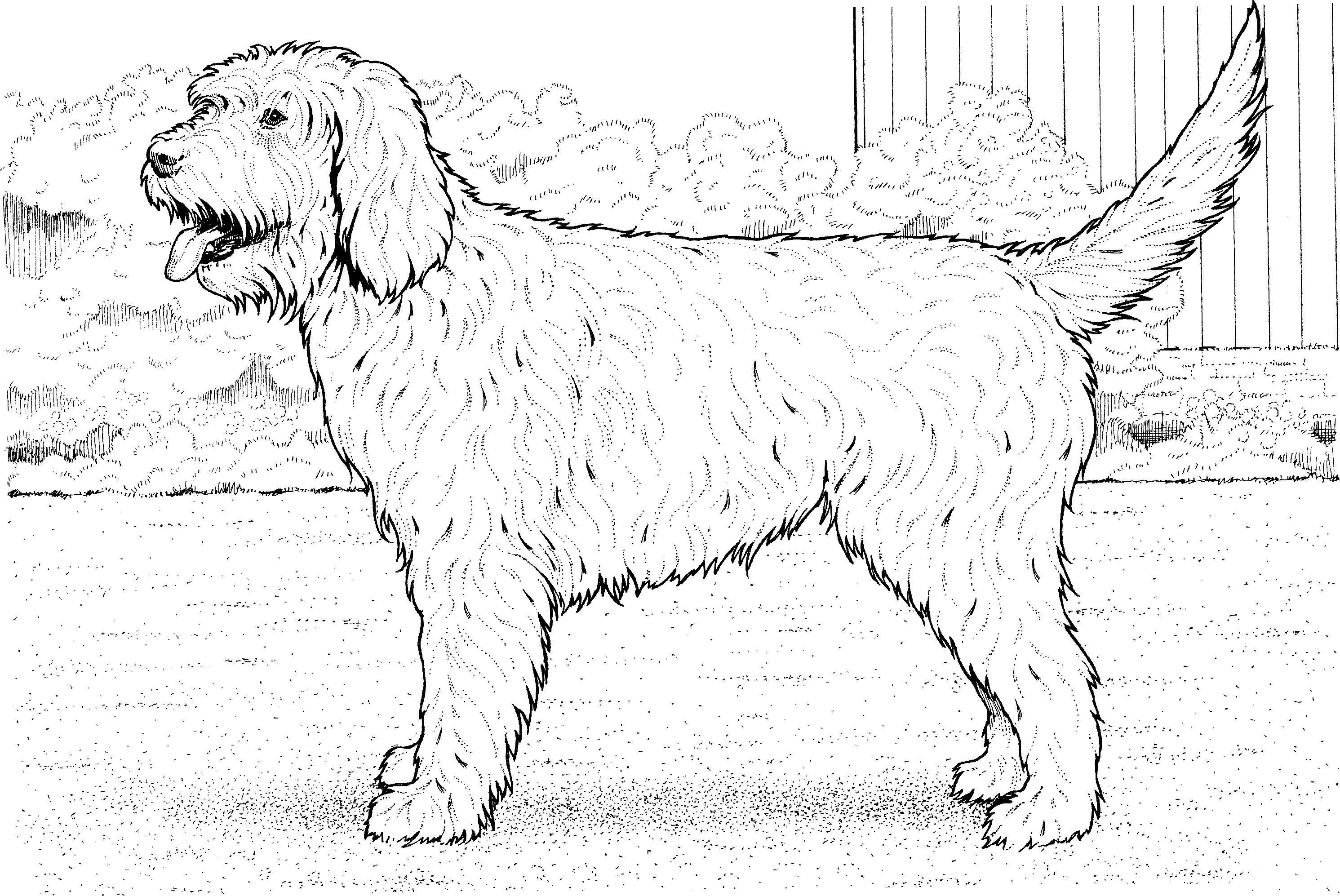 Cookapoo dog Coloring Page