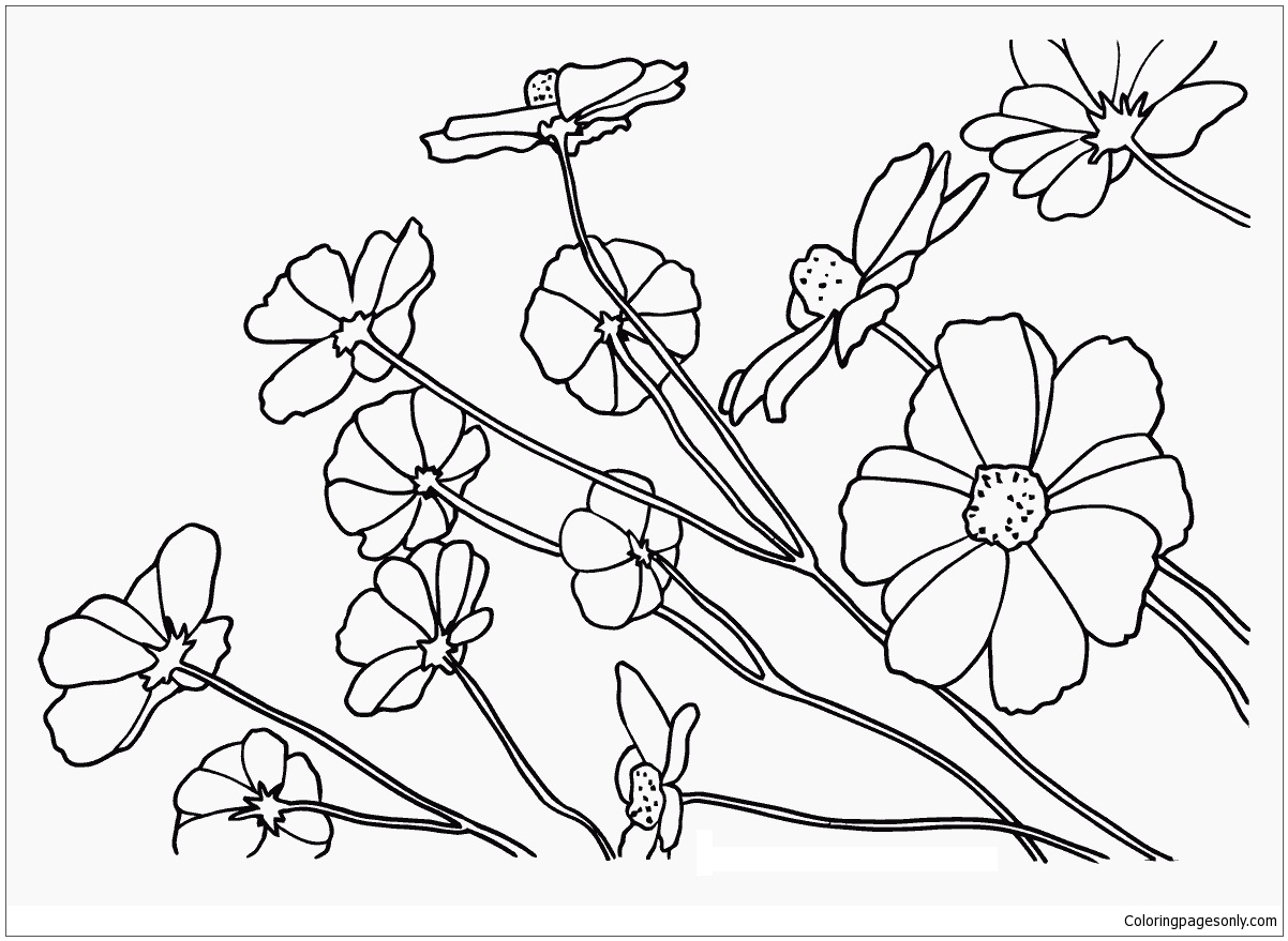 Cosmos Flowers Coloring Page