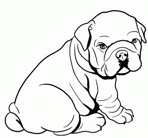 Cute Baby Pitbull Coloring Page