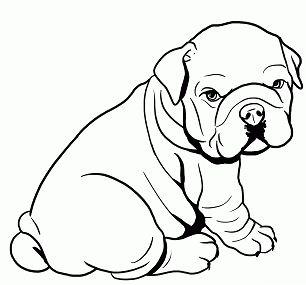 Cute Baby Pitbull