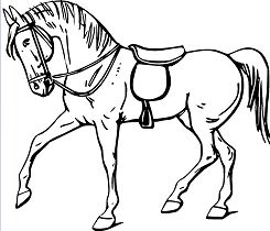 Cute Horse 3