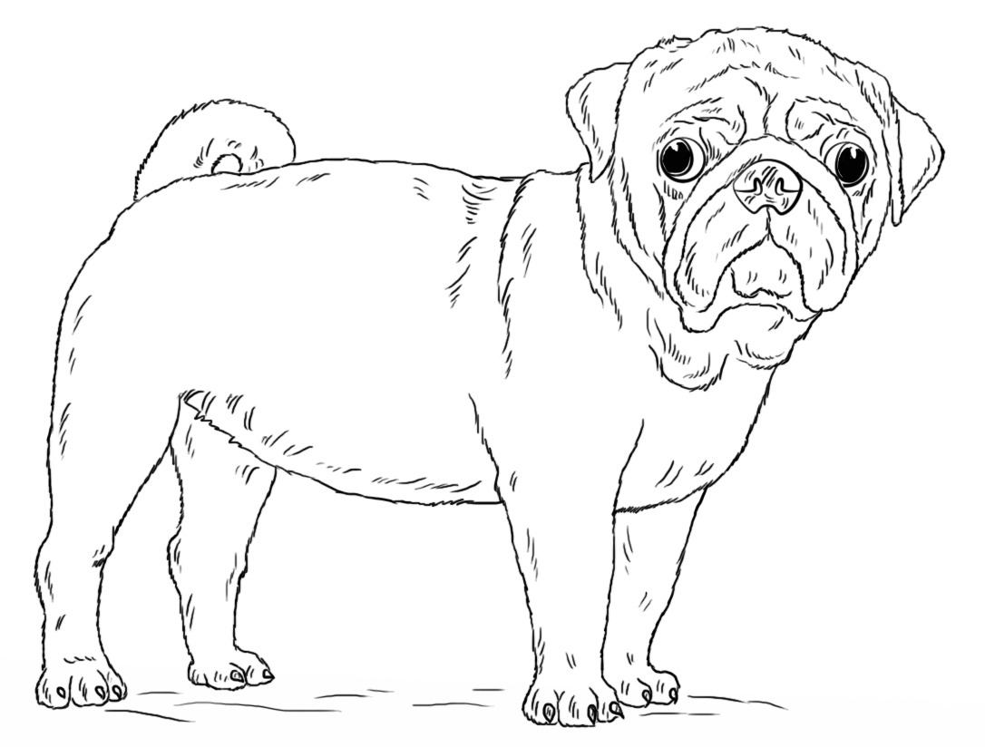 Cute Pug Coloring Page