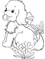 Cute Puppy 4