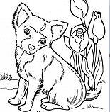 Cute Puppy 9