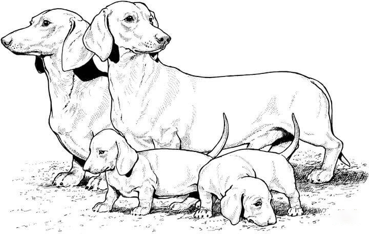 Dachshund and puppies Coloring Page