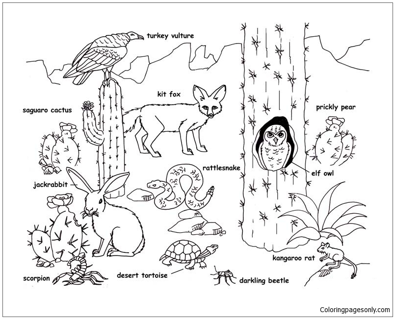 desert animals coloring page free coloring pages online - Prickly Pear Cactus Coloring Page