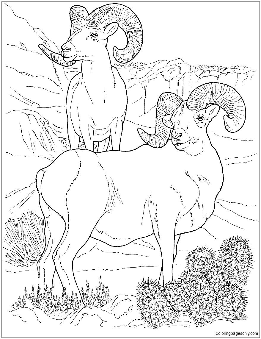 Desert Bighorn Sheep Coloring Page