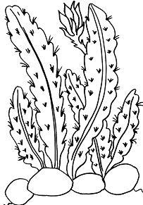 Desert Cactus 1