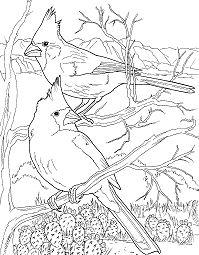 Desert Cardinals