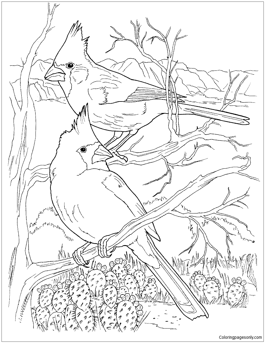 Desert Cardinals Coloring Page