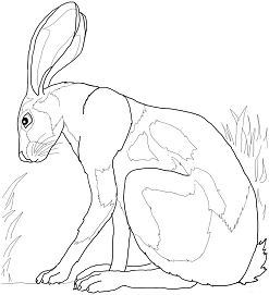 Giant Kangaroo Rats On The Desert Coloring Page Free