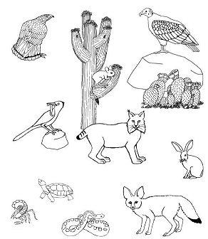 Deserts Creatures