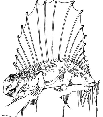 Dimetrodon Early Permian Synapsid Coloring Page