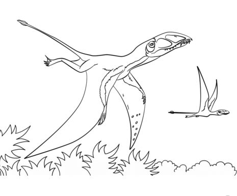 Dimorphodon Dinosaurs Coloring Page