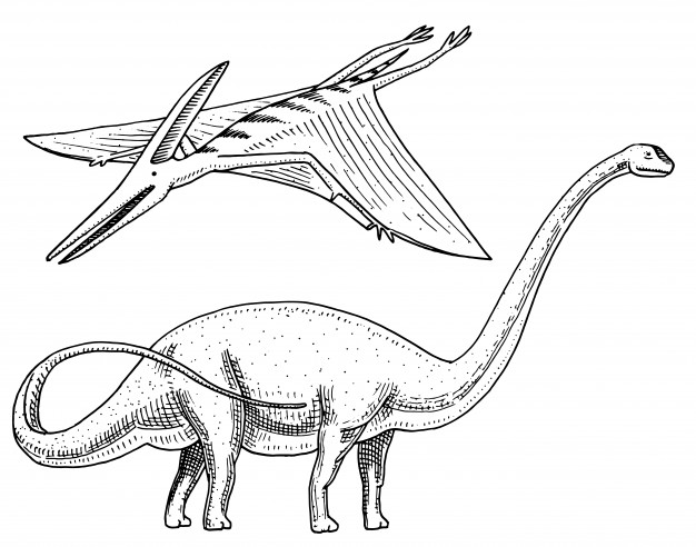 Dinosaur Sauropad Coloring Page