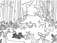 Does and fawns in forest Coloring Page