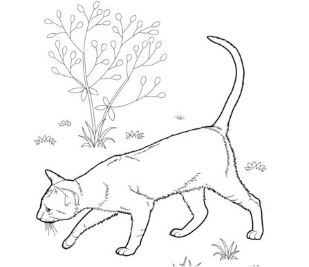 East Shorthair Cat