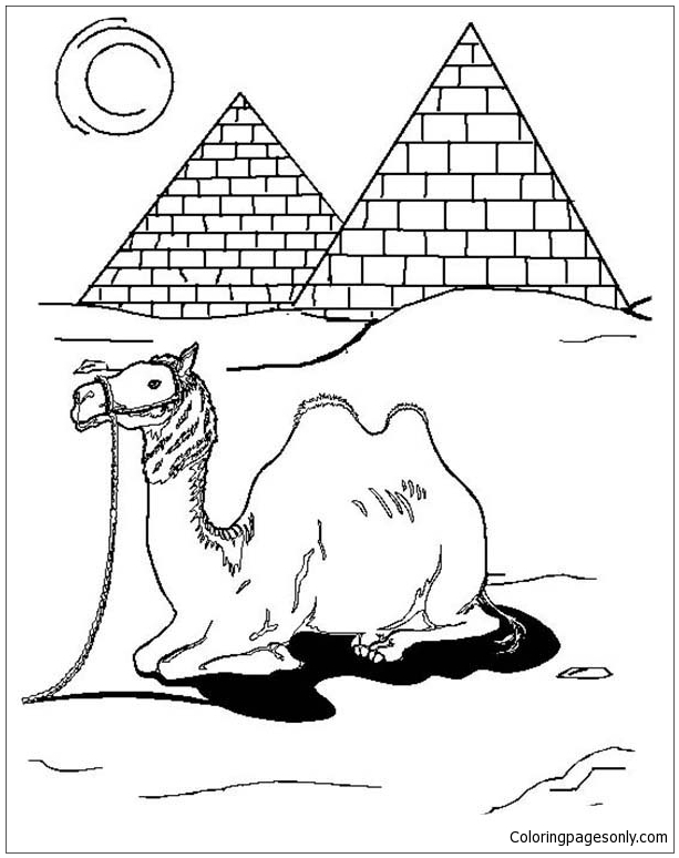 Egyptian Camel Coloring Page