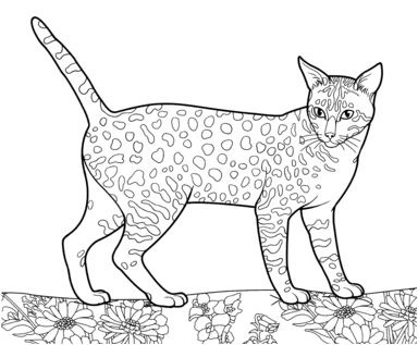 Egyptian Mau Coloring Page