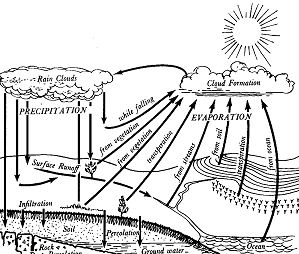Elegant Water Cycle Coloring Page