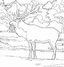 Elk looks so peaceful as he watches over his Rocky Mountain home Coloring Page