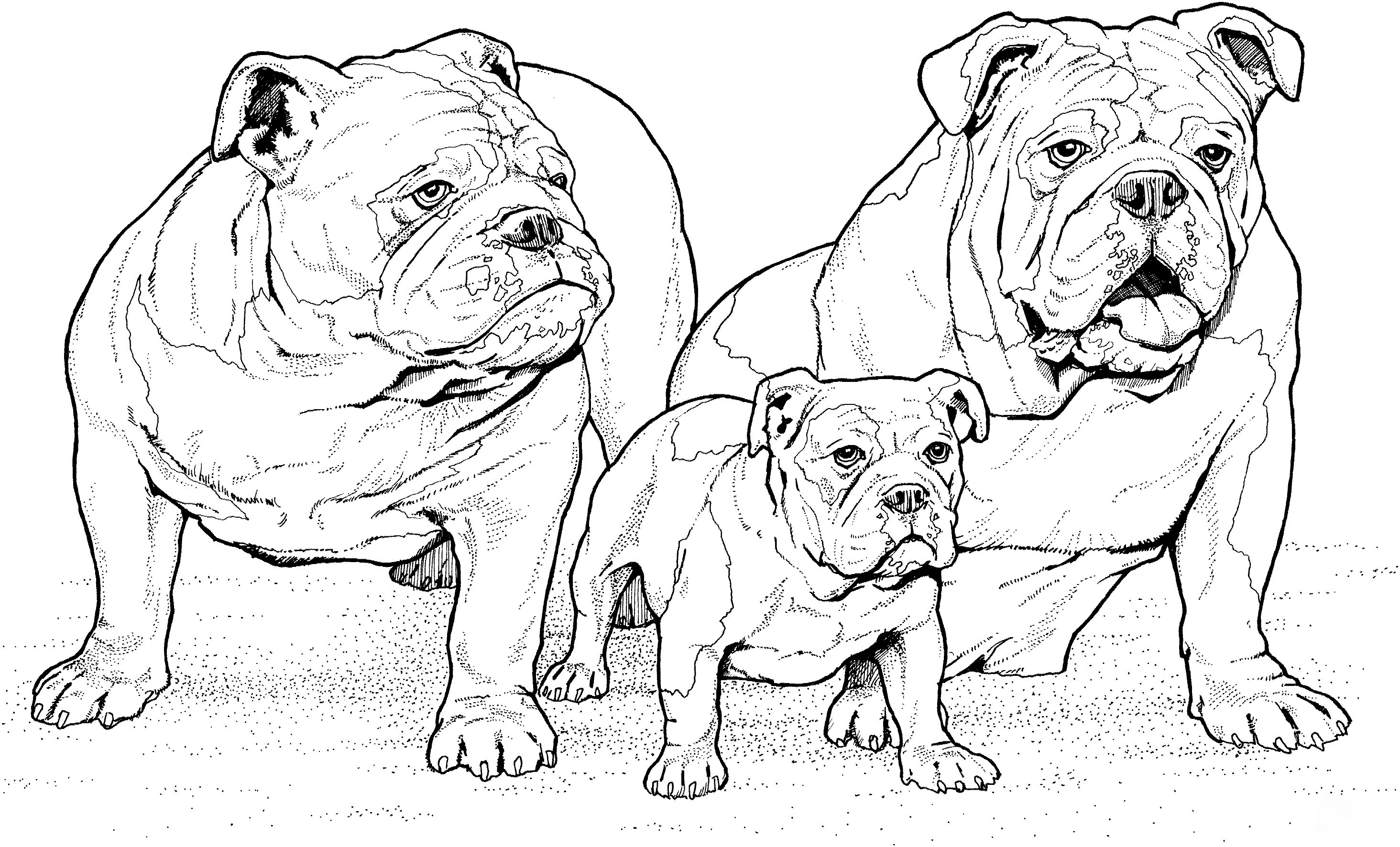 English Bulldog with Puppy Coloring Page