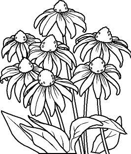 Flower - image 2