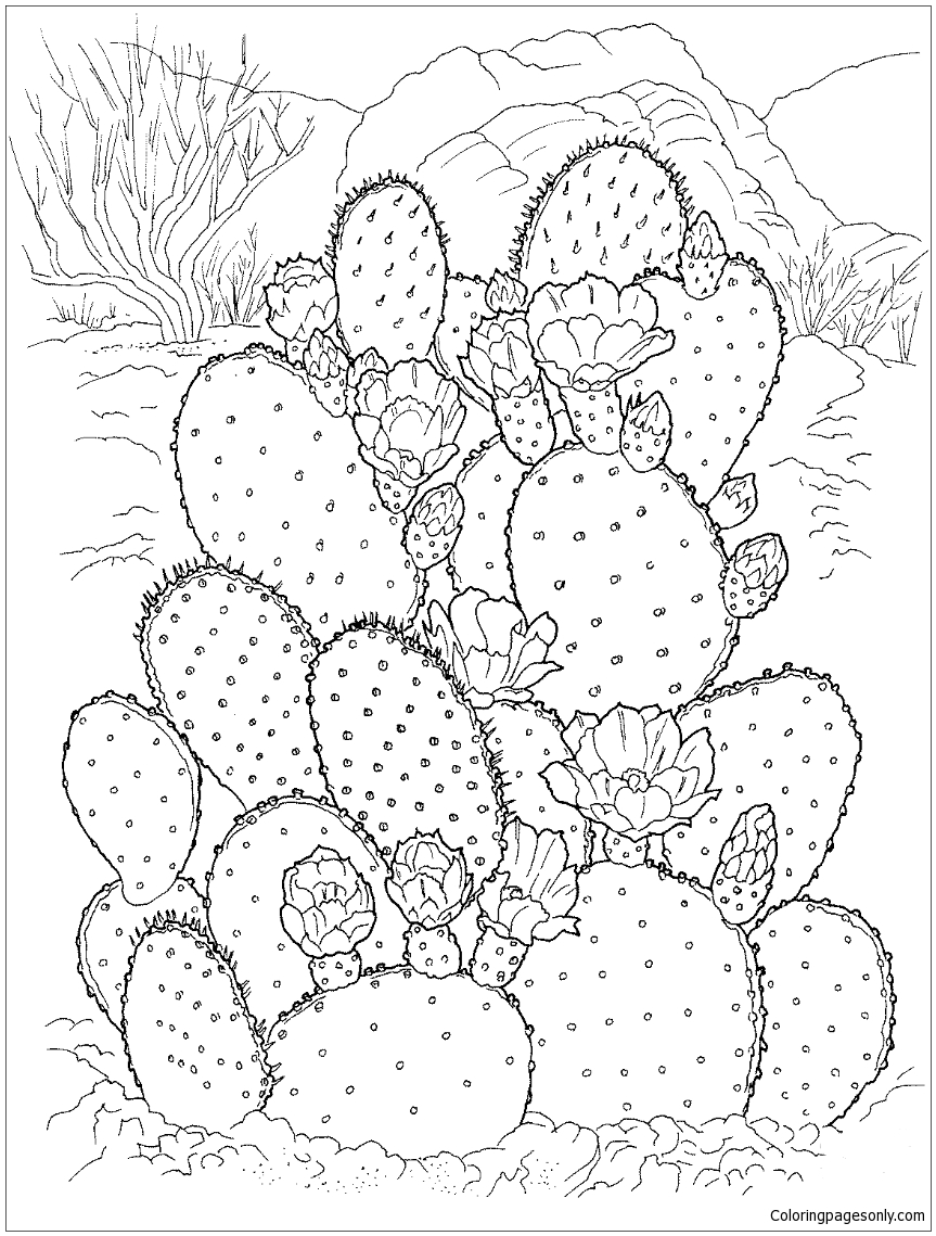 Flowering Cactus On The Desert Coloring Page