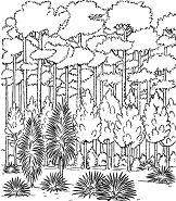Forest Trees Coloring Page