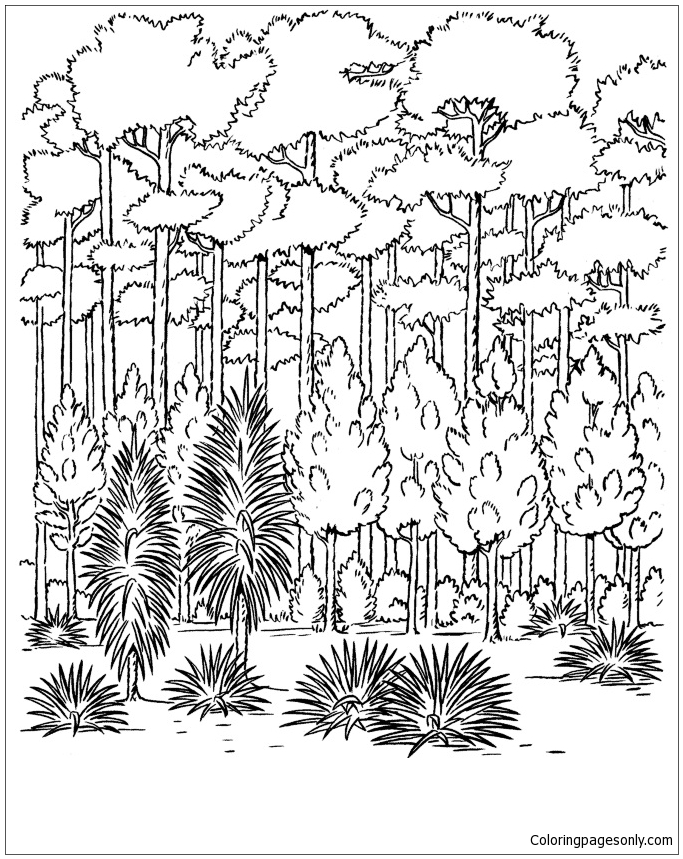 Forest trees coloring page free coloring pages online for Rainforest leaves coloring pages