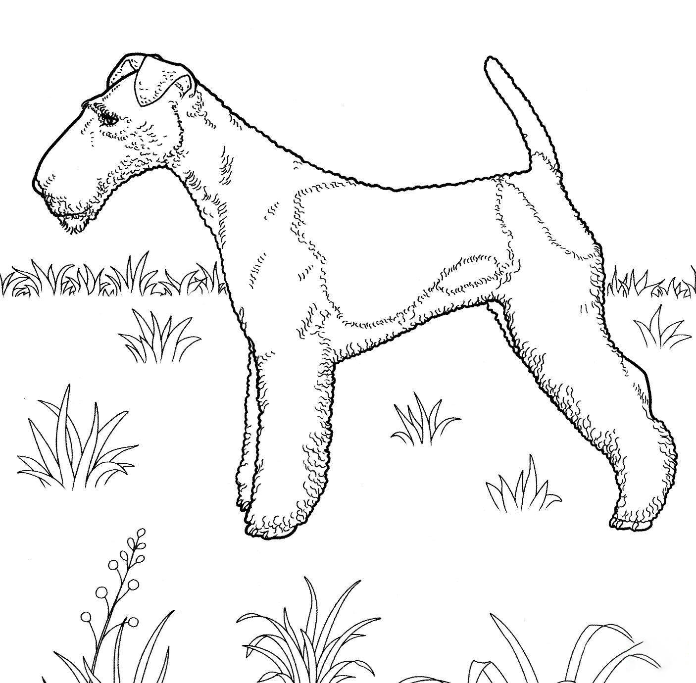 Fox Terrier Coloring Page