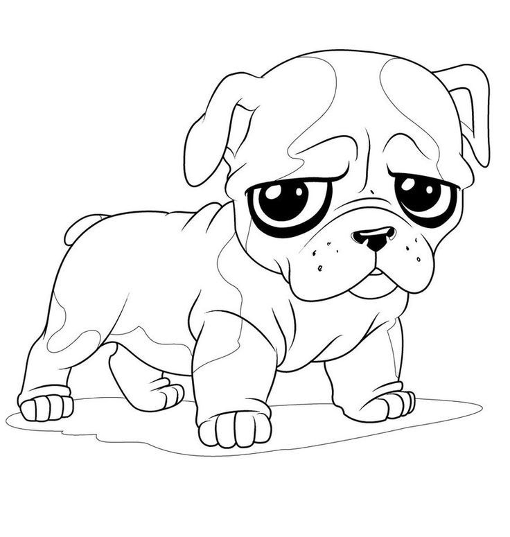 Fun Puppy