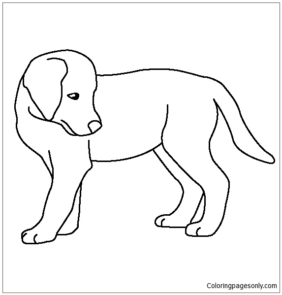Golden Retriever Puppy 1 Coloring Page