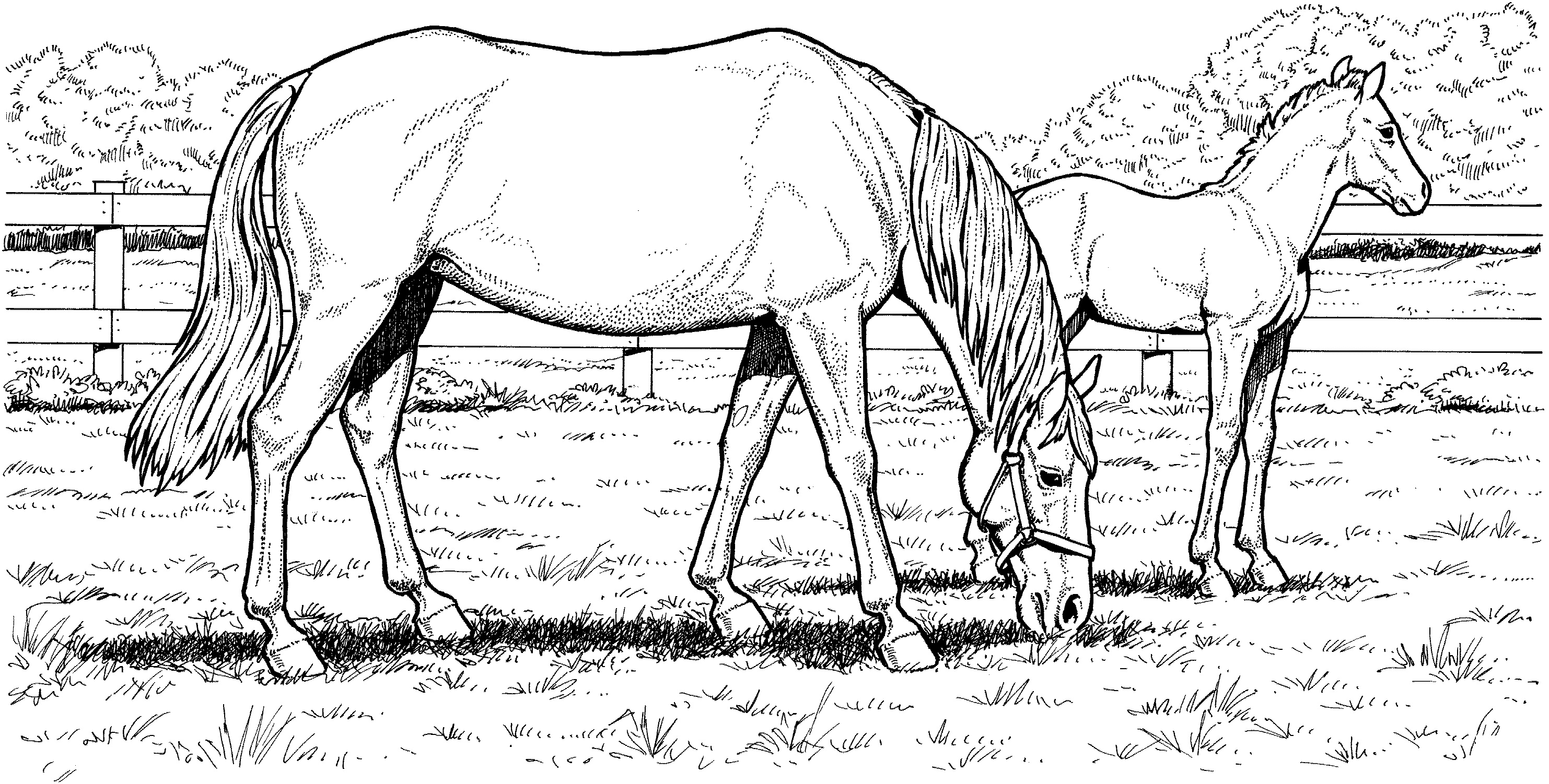 Grazzing Mare Horse Hard Coloring Page