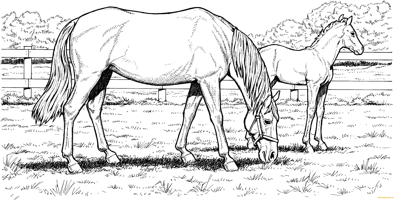 Disegni Da Stampare Cavalli: Grazzing Mare Horse Hard Coloring Page