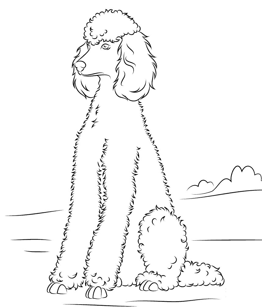 Grooming Poodle Coloring Page