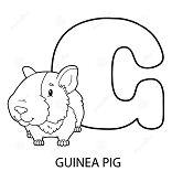 Guinea Pig Alphabet