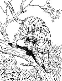 Hard Animal 2 Coloring Page