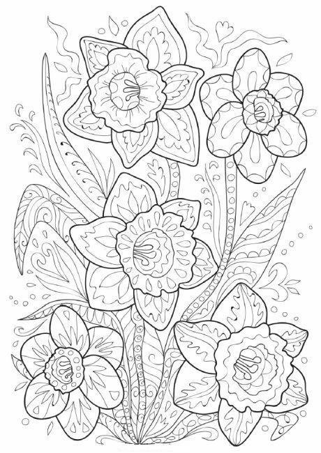 Hard Daffodil Doodle