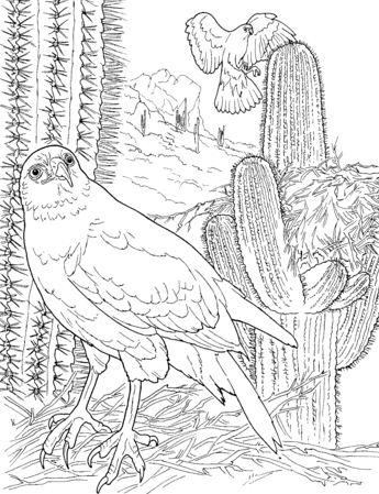 Hawk In Saguaro Forest