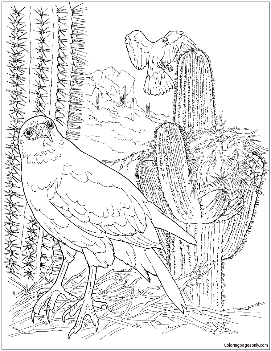 Hawk In Saguaro Forest Coloring Page